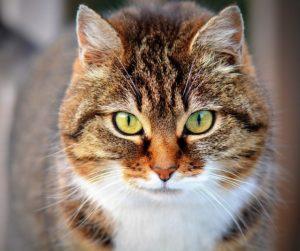 ネコー正面顔